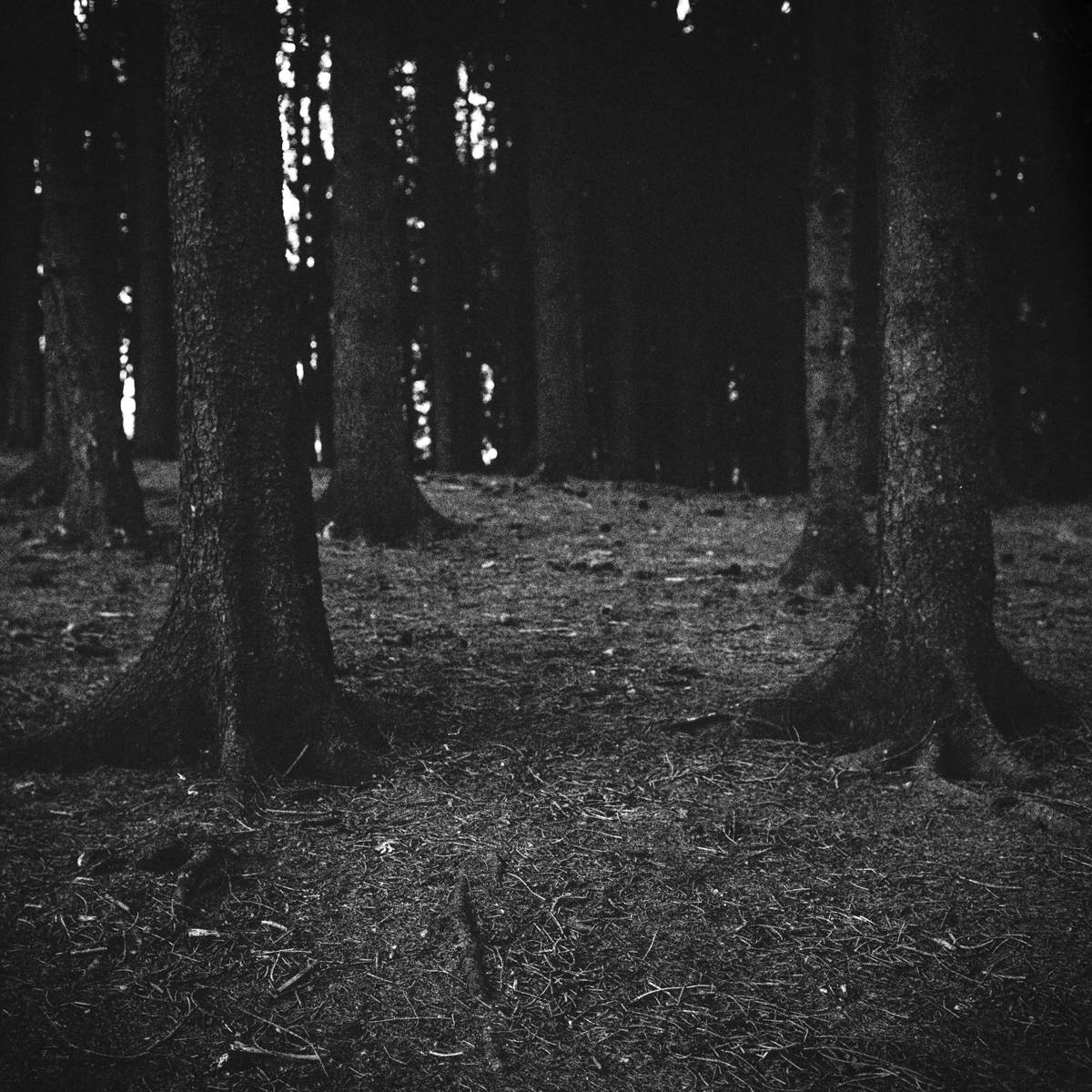 Christopher_Schmidtke_Into_the_woods_3