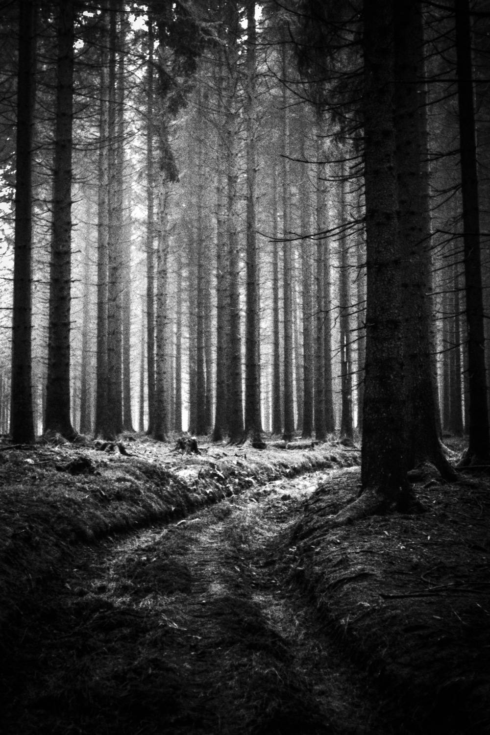 Christopher_Schmidtke_Into_the_woods_4